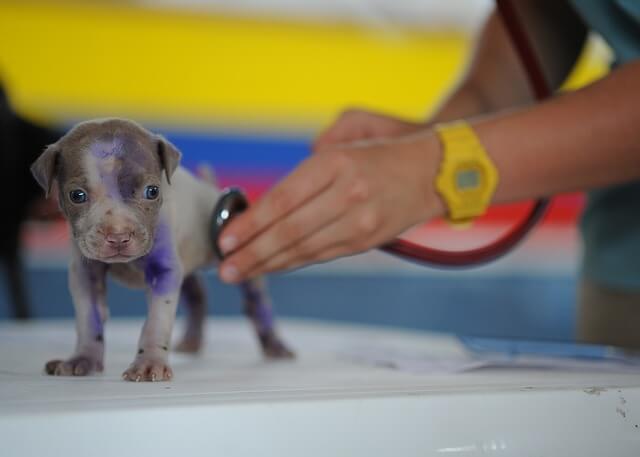La consulenza veterinaria on-line - Benefici e rischi