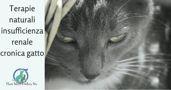 insufficienza renale gatto Forum