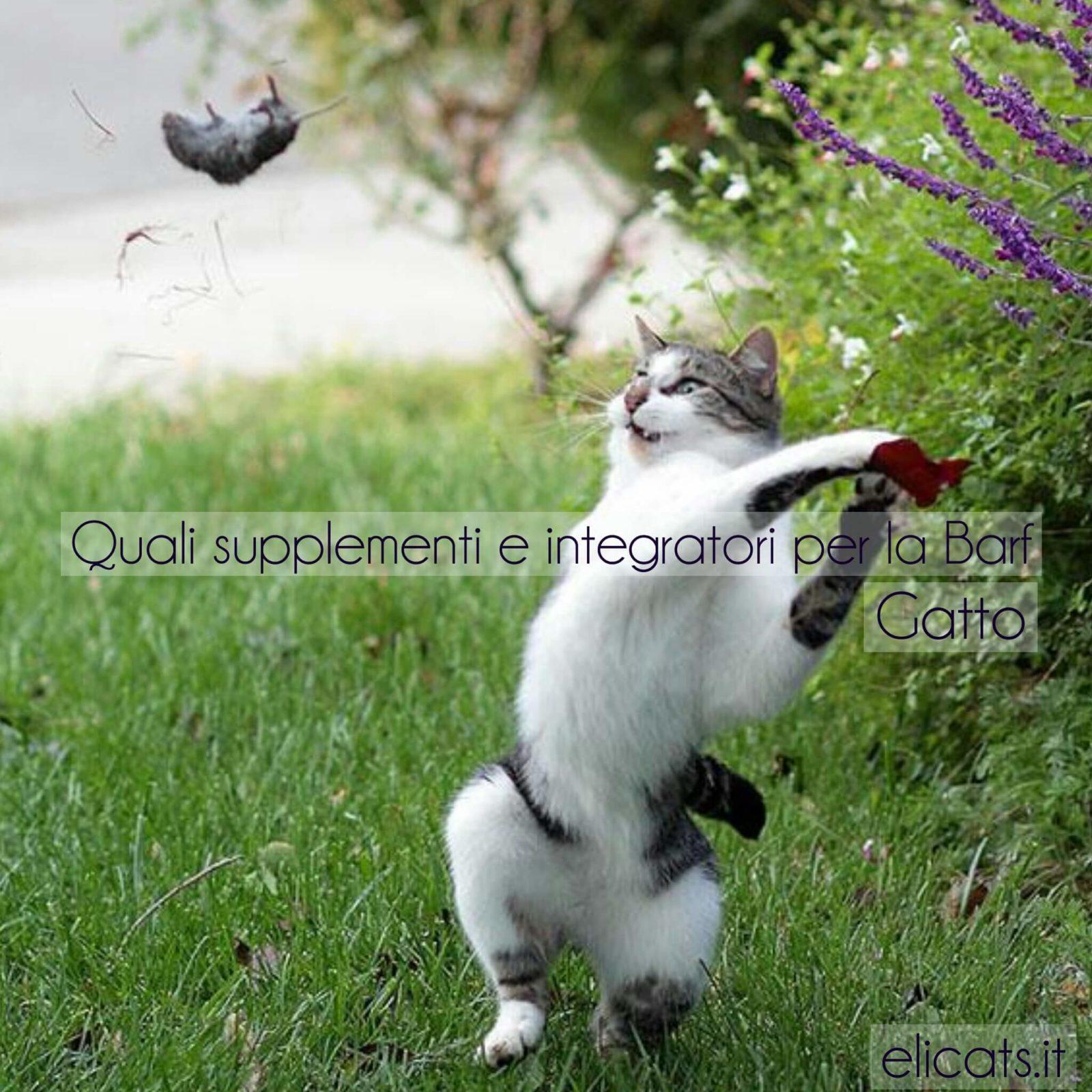 Supplementi BARF Gatto Cane