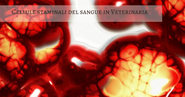 Cellule staminali del sangue in Veterinaria