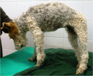 fig 1 caso clinico Agopuntura veterinaria muffy
