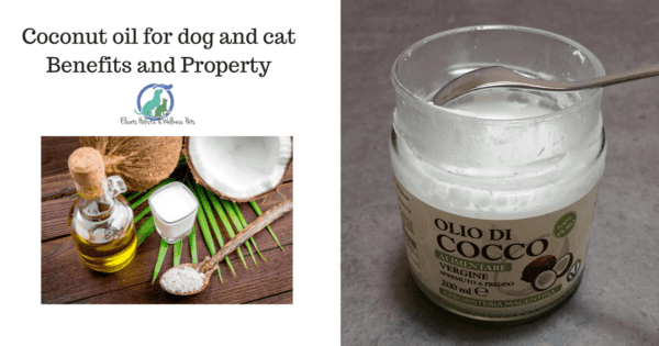 Coconut oil for dog and cat