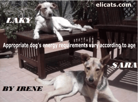 Appropriate dog's energy requirements vary according to age