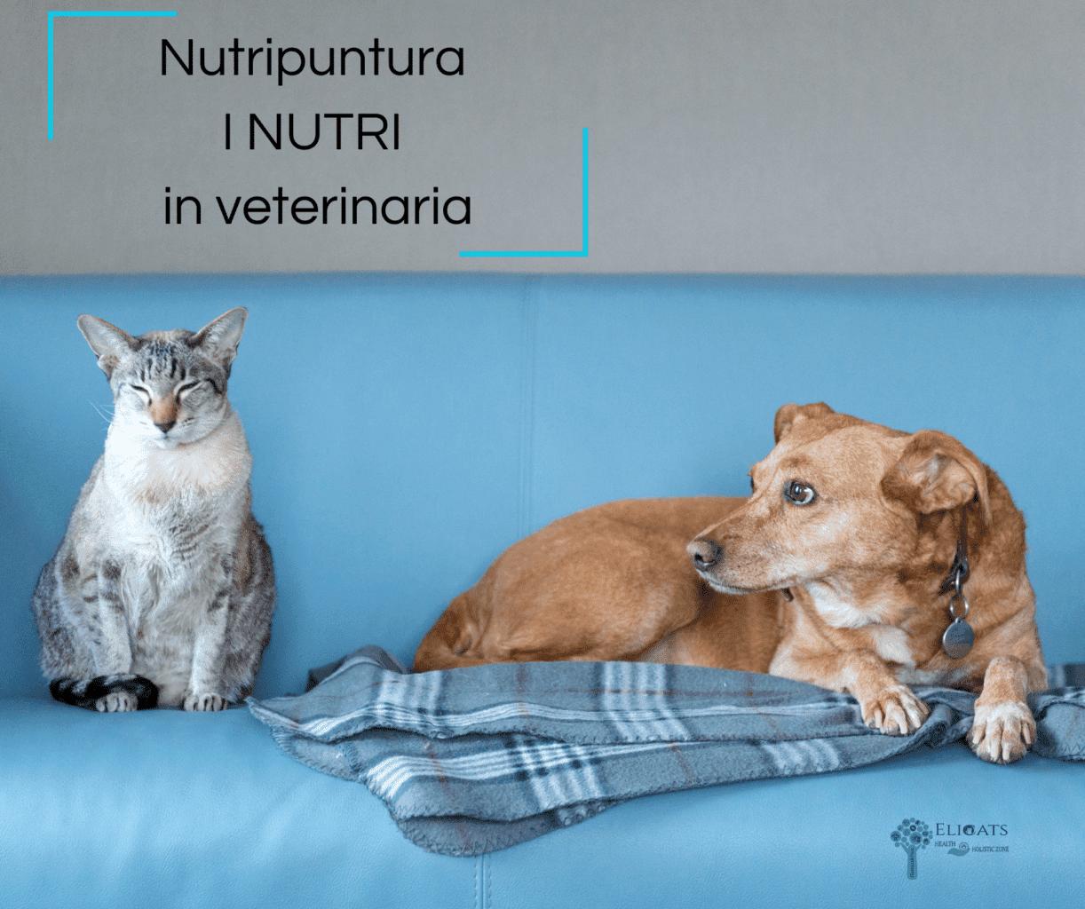 Nutripuntura gatto cane