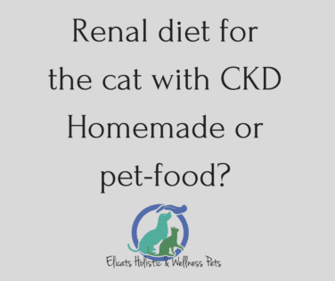 Homemade food for cats with kidney disease