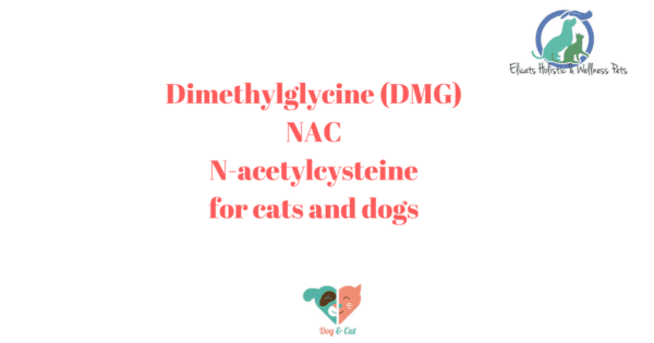 Dimethylglycine (DMG) NACN-acetylcysteinefor cats and dogs