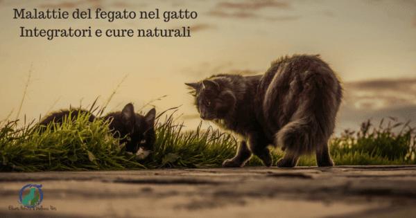 Malattie del fegato nel gatto, integratori e cure naturali