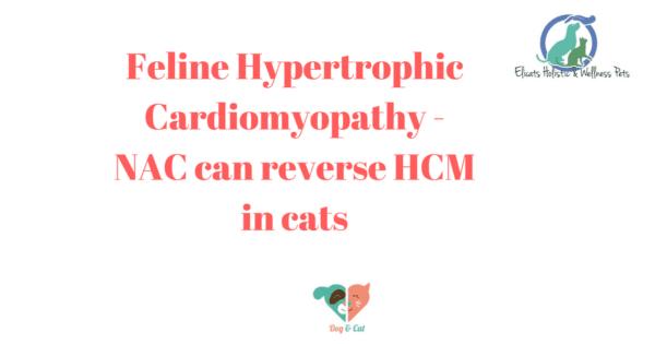 Feline Hypertrophic Cardiomyopathy