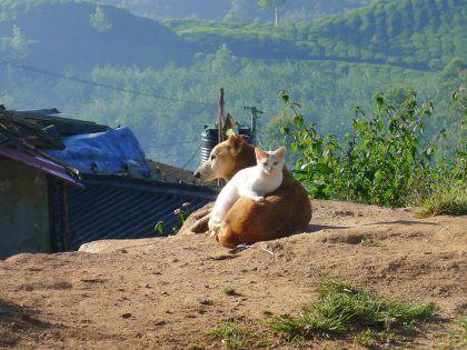 Echinacea gatto cane