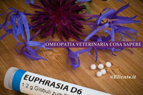 Omeopatia veterinaria gatto cane