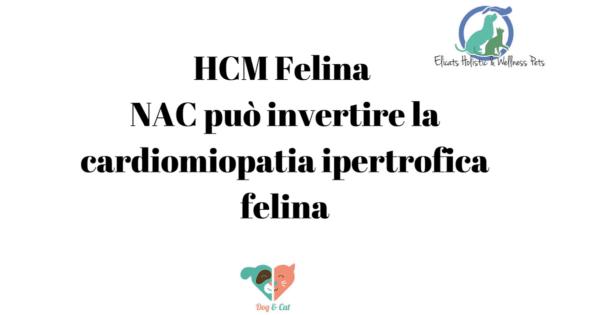 HCM Felina