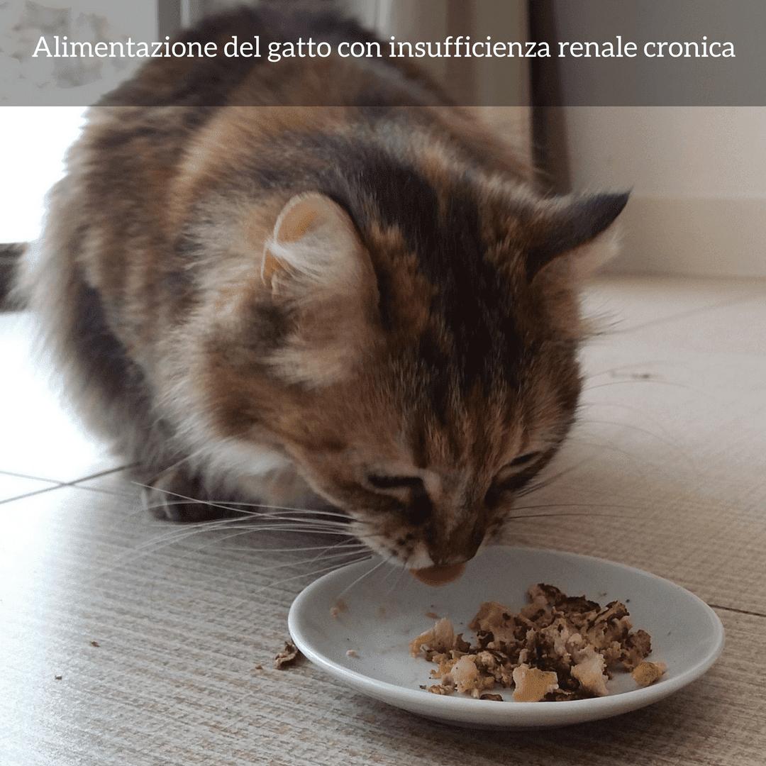 dieta insufficienza renale gatto