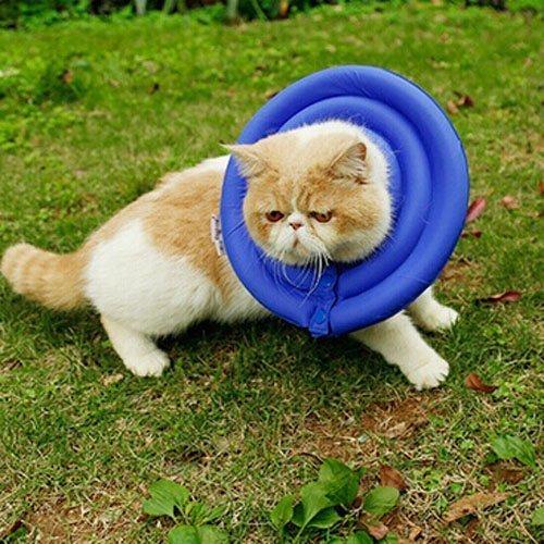 tumore mammario gatto collare convalescenza