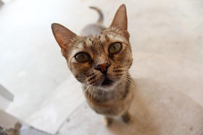 Analisi urine gatto