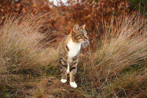 Cats Cystitis natural treatments