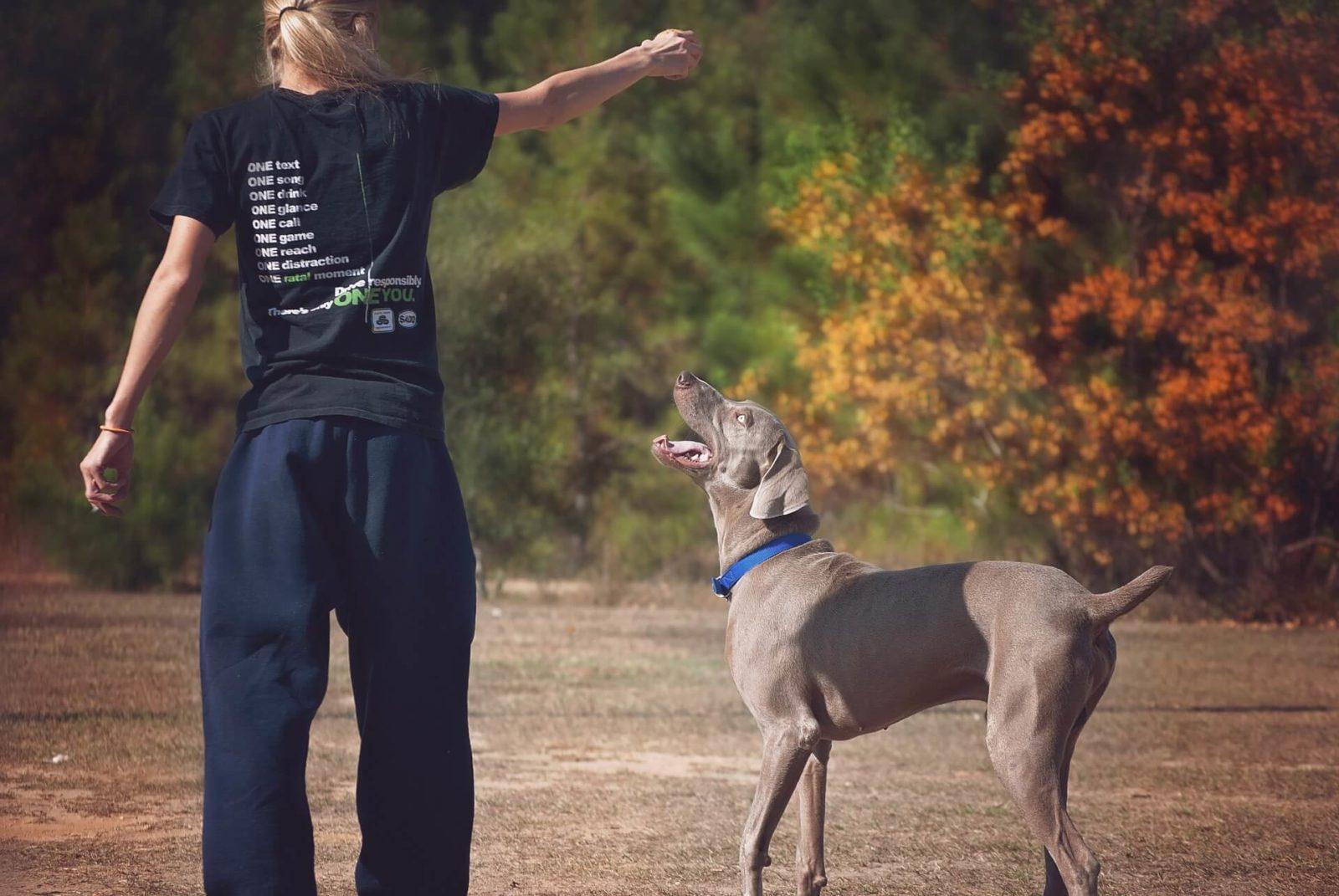 Rimedi naturali per calmare il cane