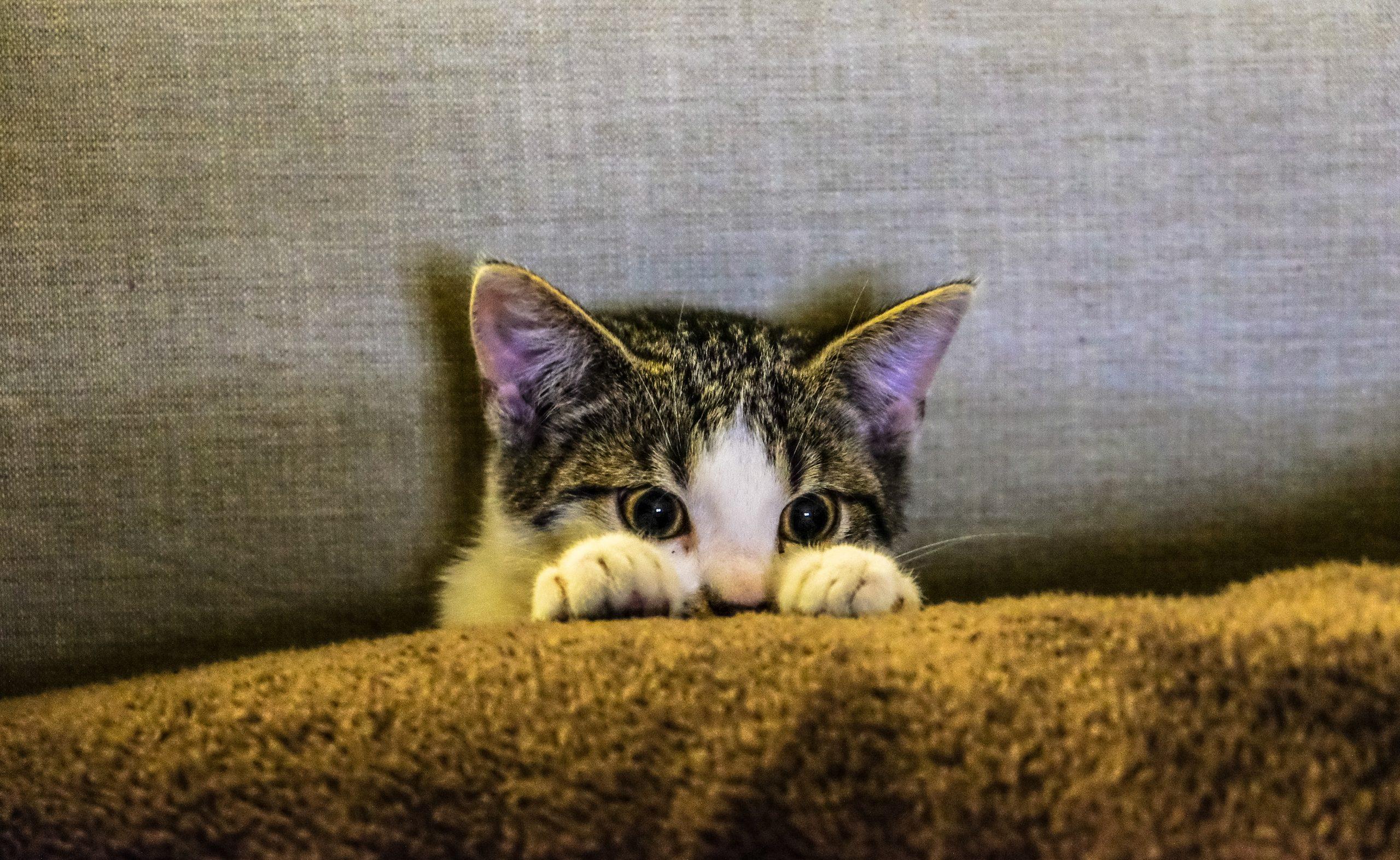 Ostruzione urinaria gatto