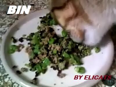 Riso nero alimentazione nel cane