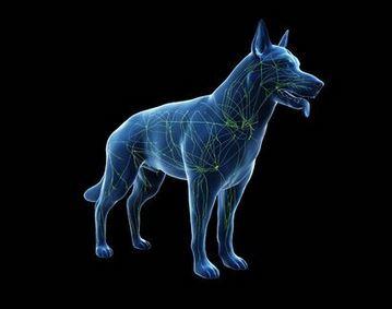 Miglior integratore per ossa e articolazioni cane