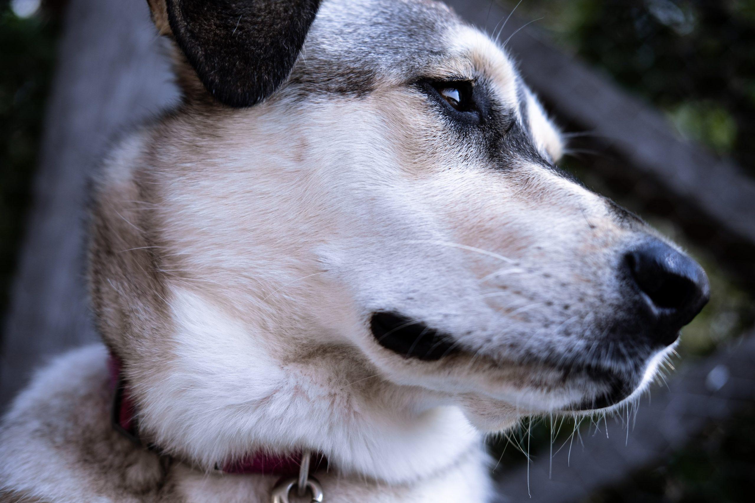 tumore pelle cane