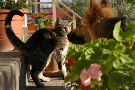 Arsenicum Album Katzen Hunde
