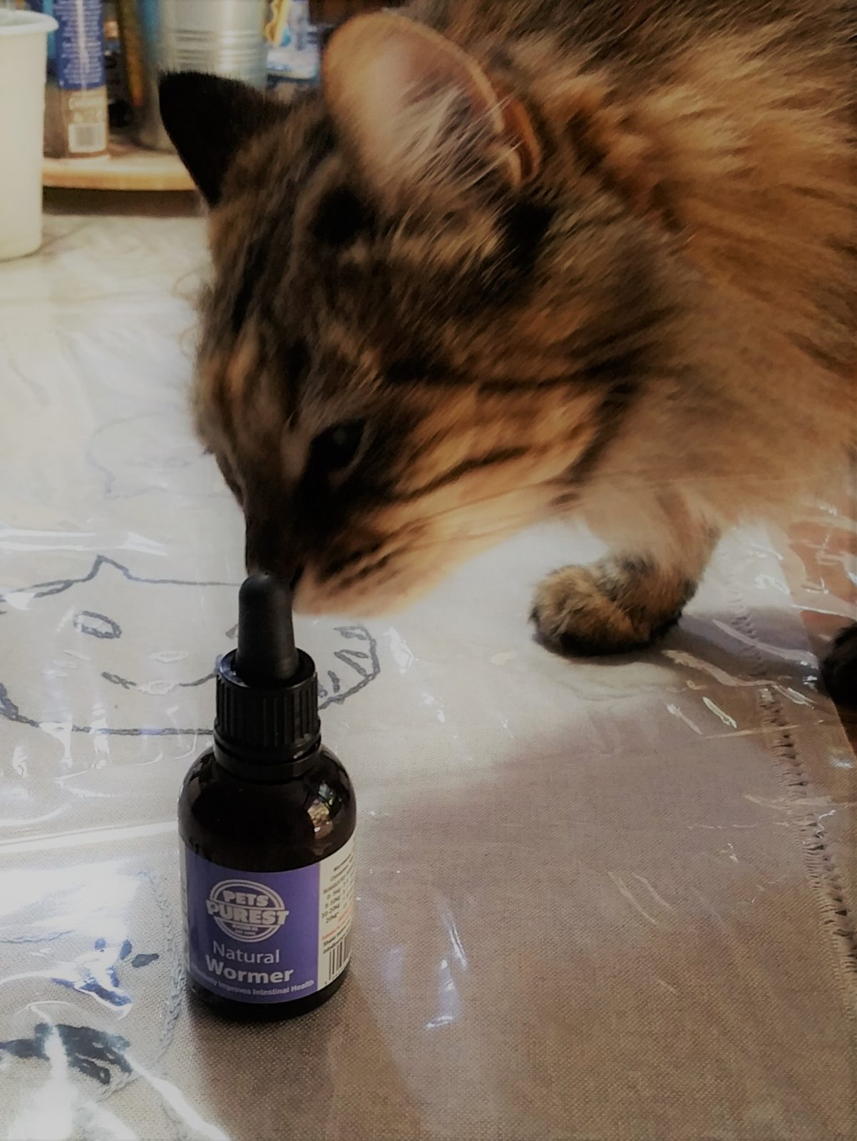vermifugo naturale gatto