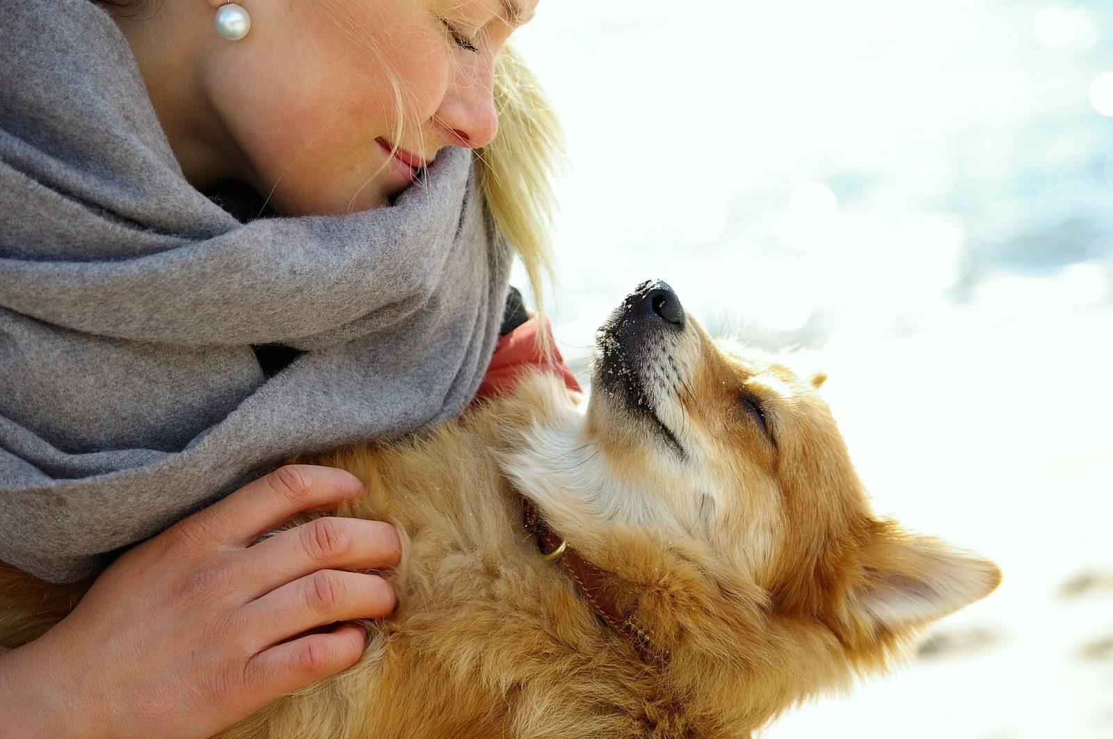 Reiki per il cane