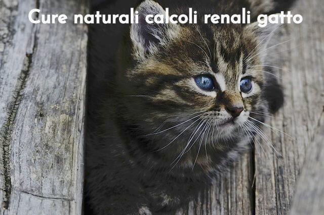 Calcoli gatto rimedi naturali