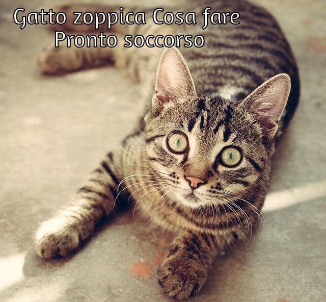 gatto zoppica