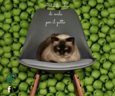 Aceto di sidro di mele per il gatto