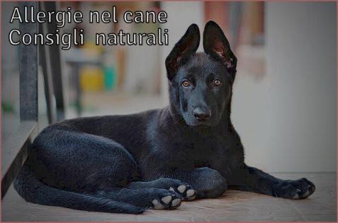 Allergie cani rimedi naturali