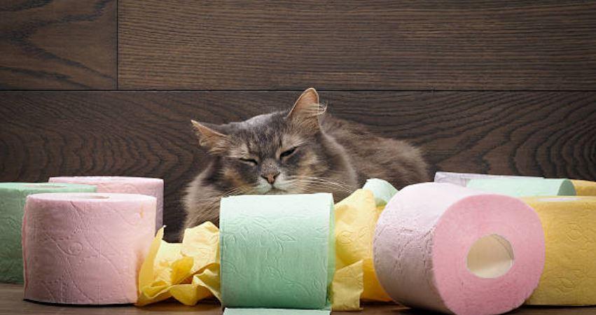 Diarrea gatto Rimedi Naturali