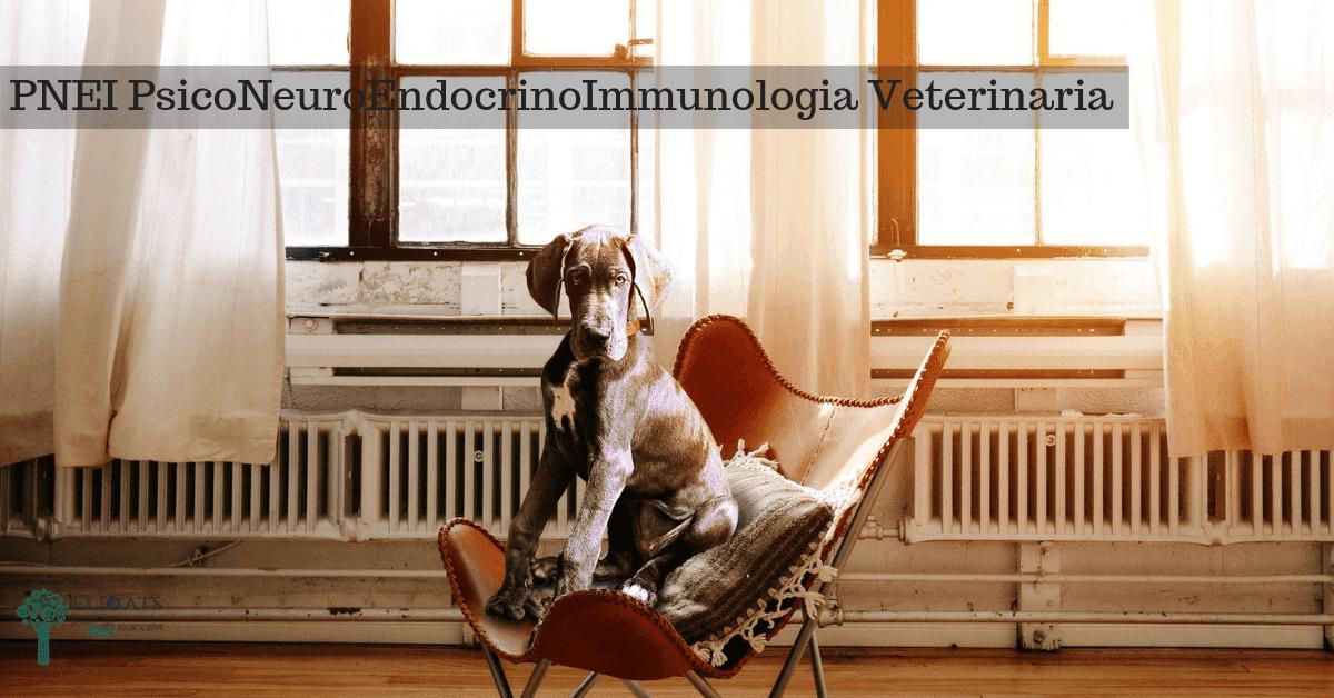 PNEI PsicoNeuroEndocrinoImmunologia Veterinaria
