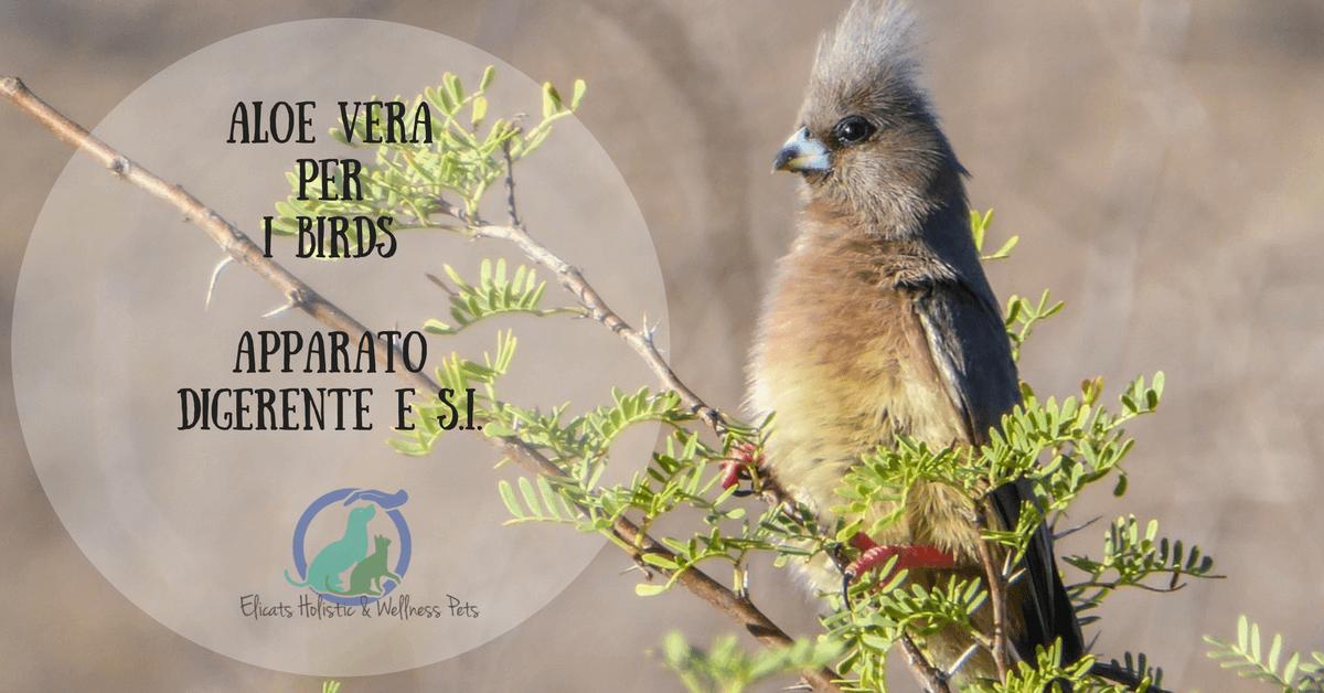 Aloe Vera per gli uccelli