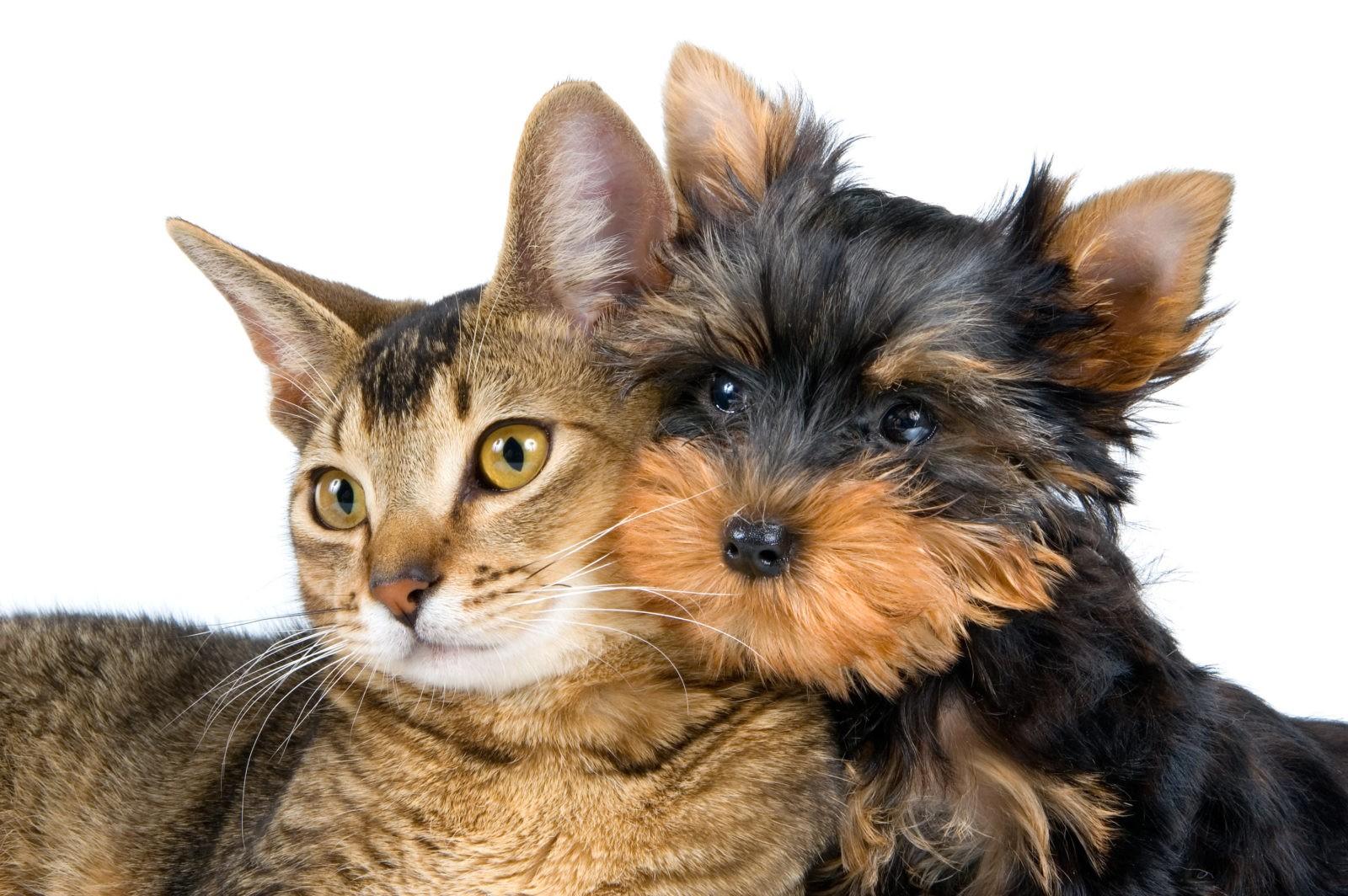 Omega-6 per cane e gatto