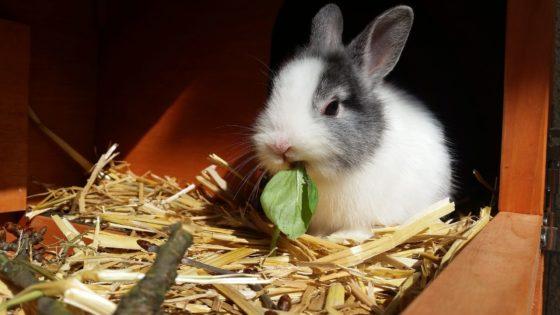 Cosa mangia un Coniglio