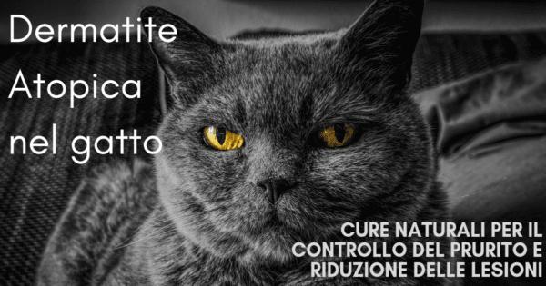 Dermatite Atopica gatto