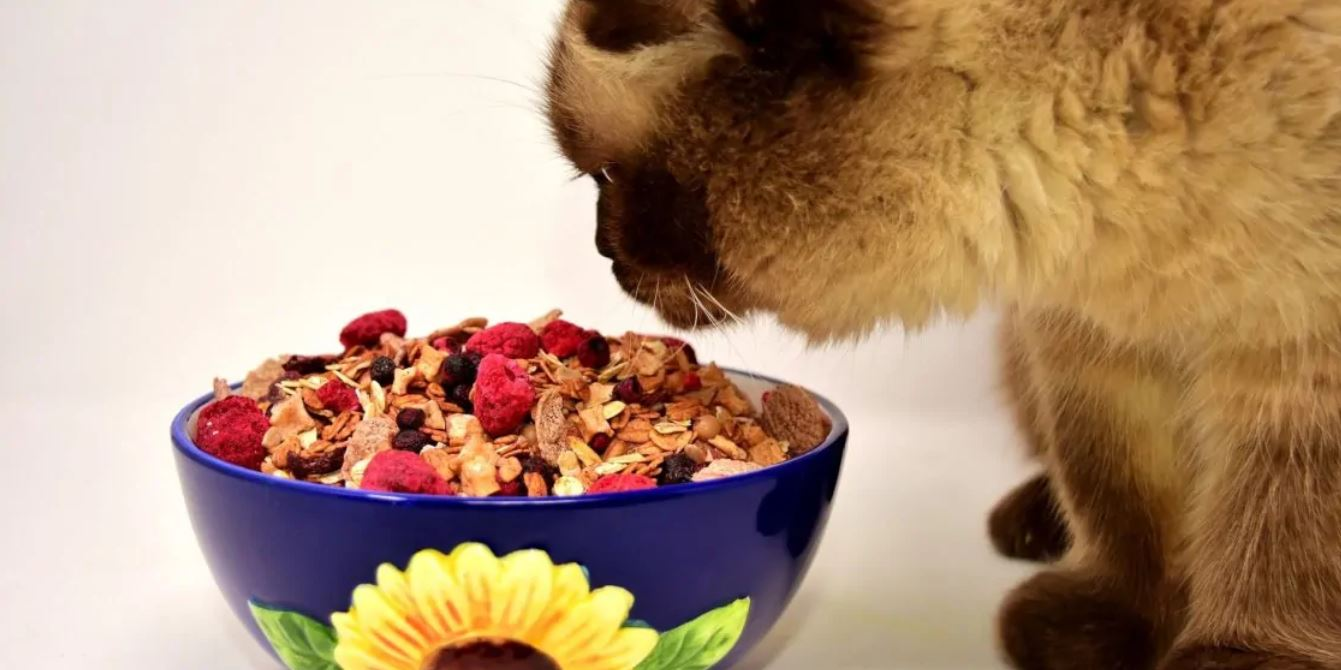 dieta casalinga gatto