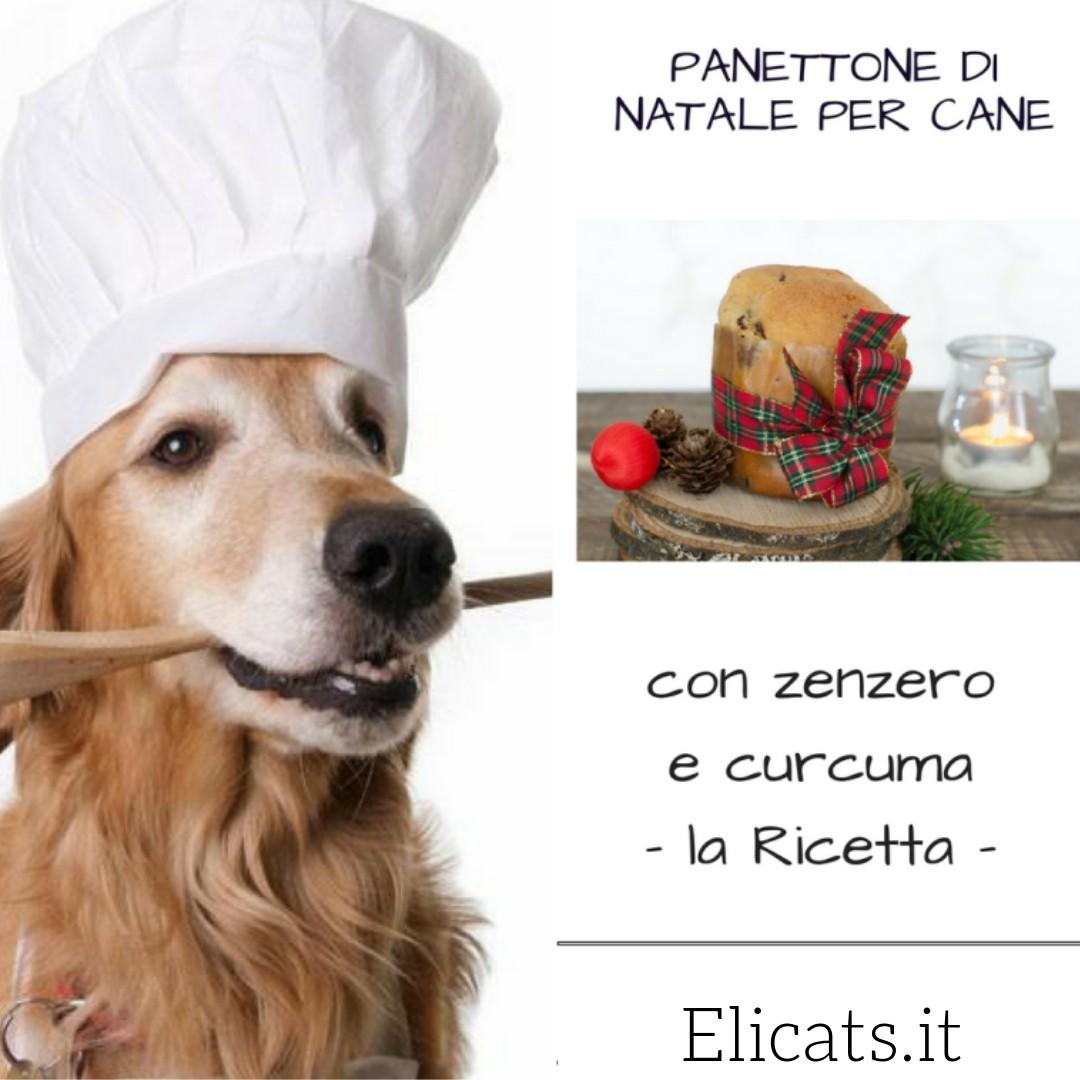 panettone cane
