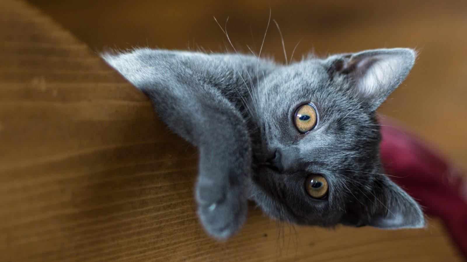 Acqua ideale per gatti