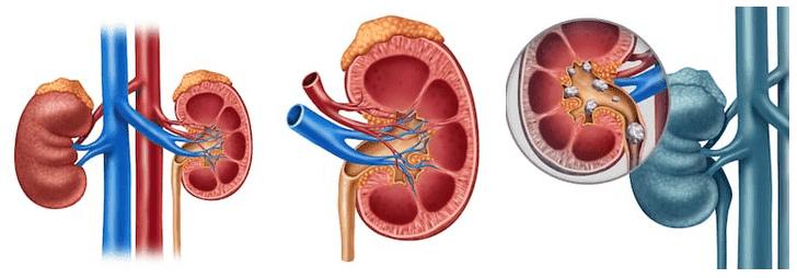 velocità filtrazione glomerulare