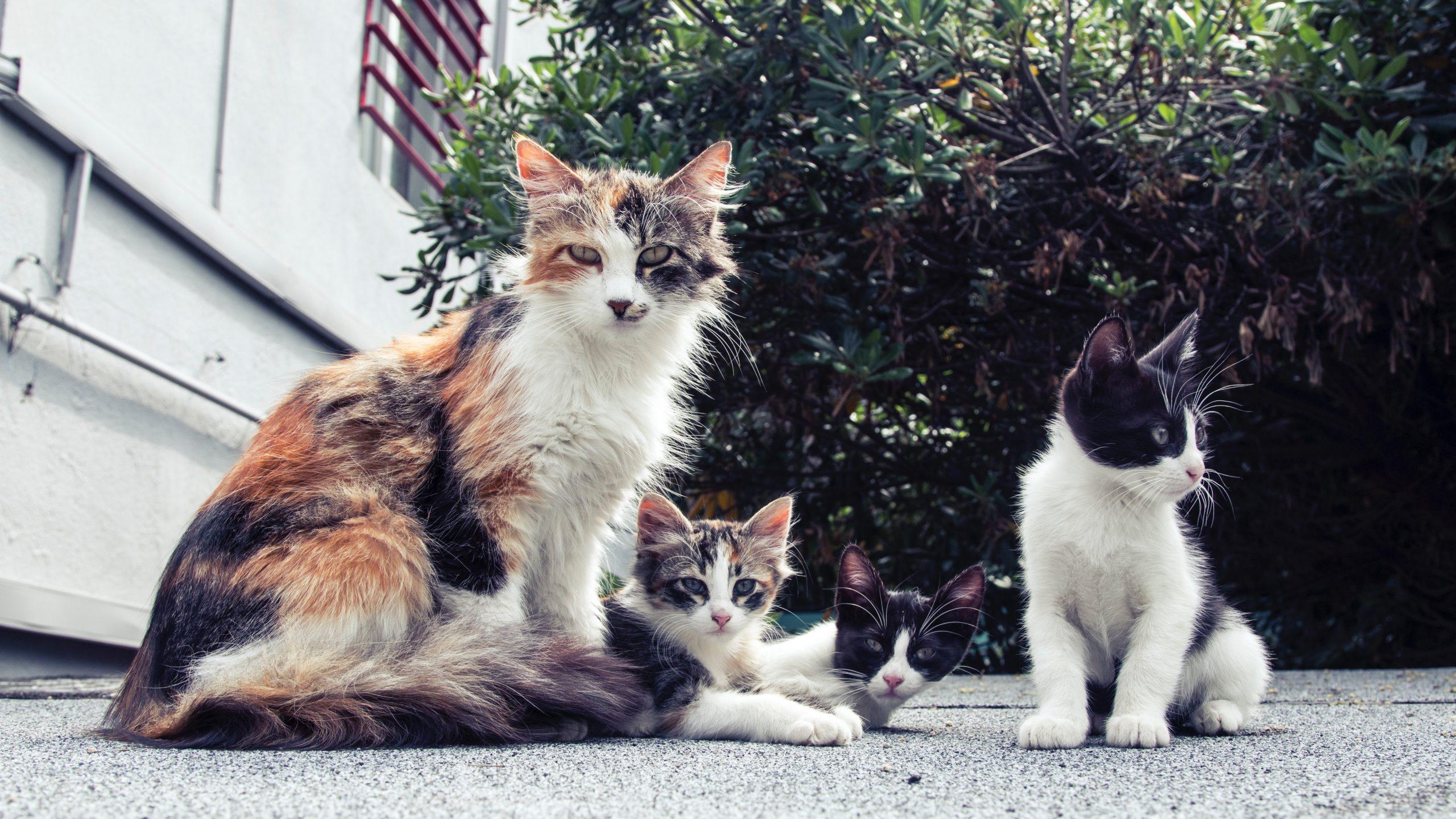 Anemia gatto FeLV