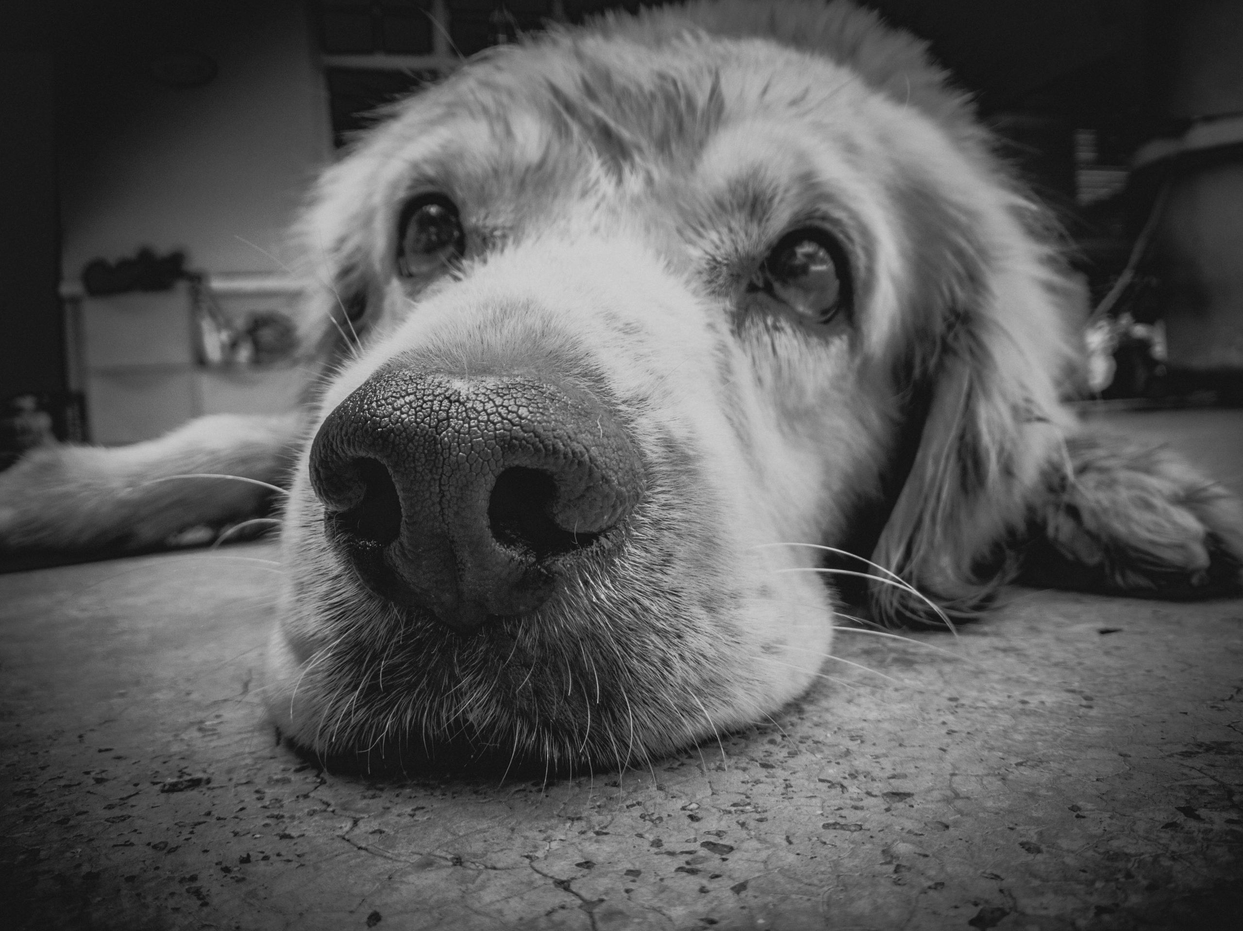dermatite atopica cane micoterapia