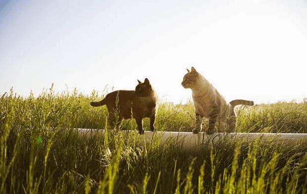 Insufficienza renale gatto cure naturali