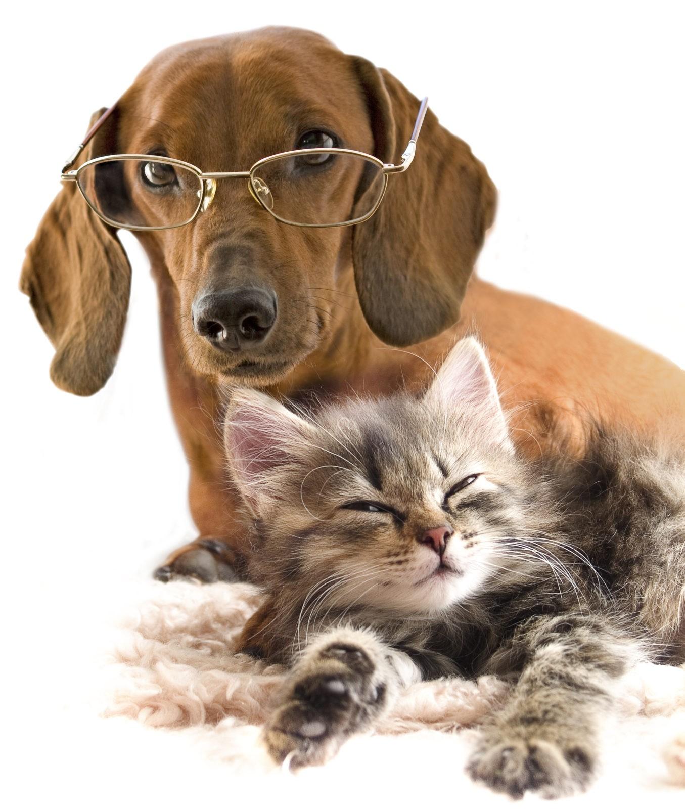 Arsenicum Album in veterinaria