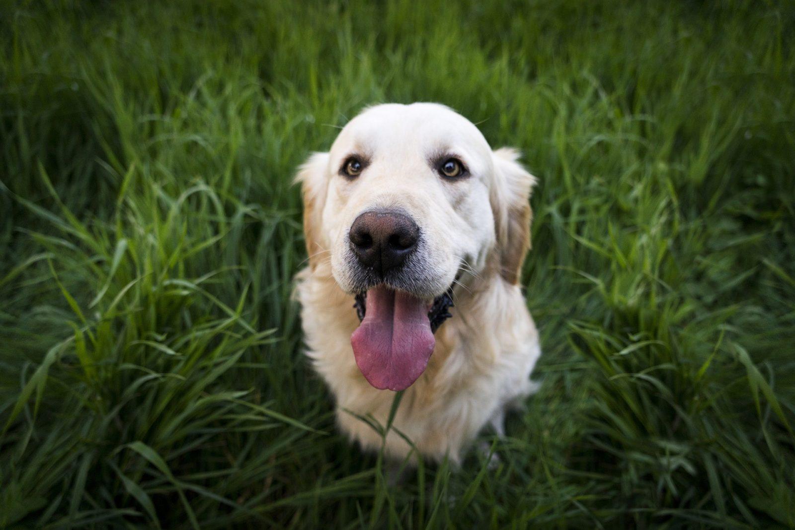 Calcoli vescica cane Rimedi Naturali