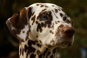 calcoli nel cane cure naturali