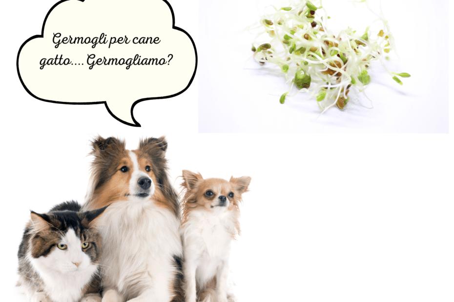 Germogli per cane gatto