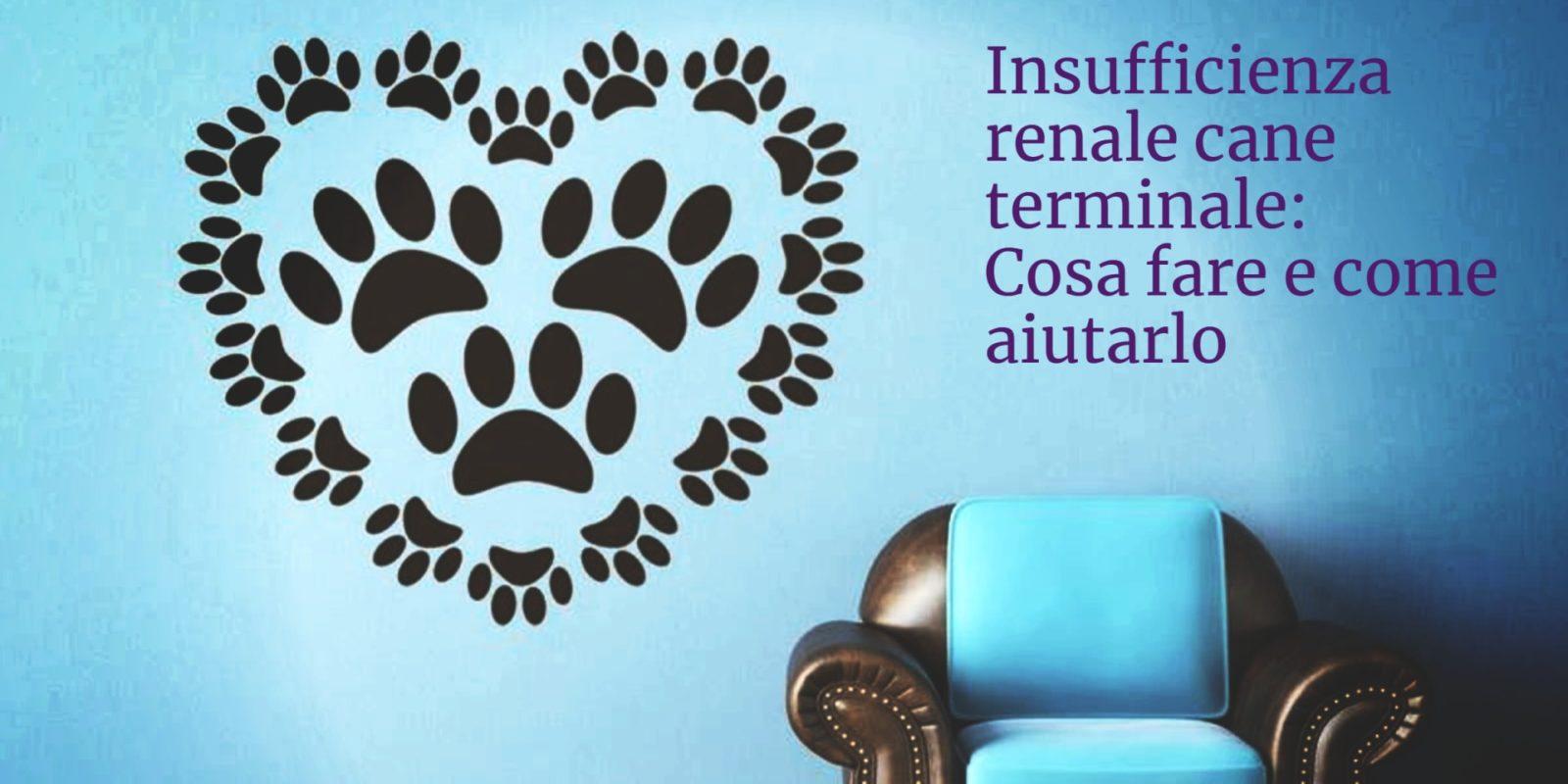 Insufficienza renale cane terminale