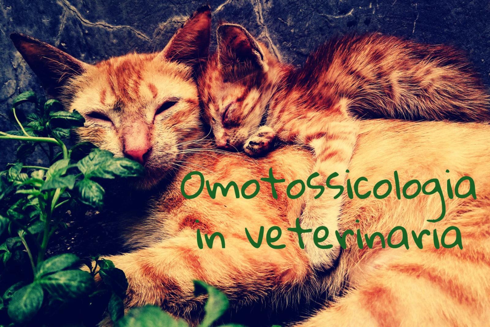 Omotossicologia Gatto Cane